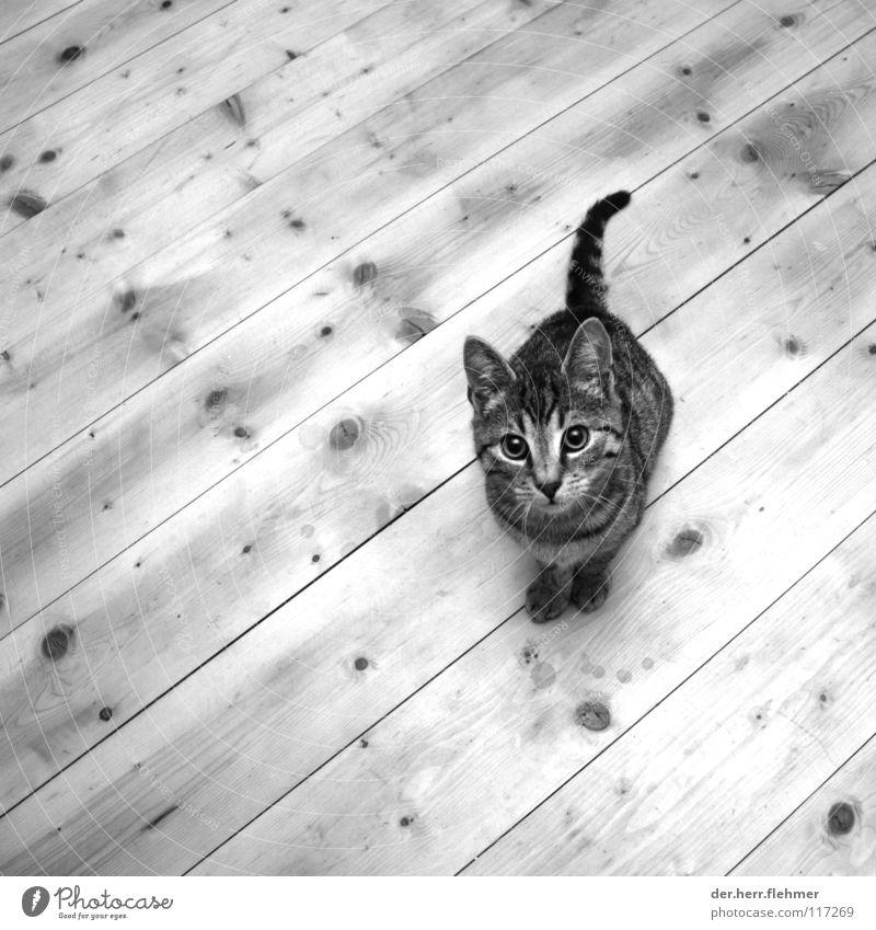 Pelle Katze Holz Holzfußboden Hallo süß Astloch Flur Haustier Tier Wurstpelle Mitgefühl Hauskatze