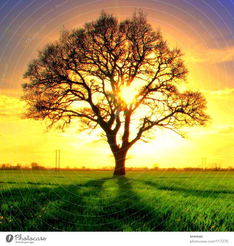 Sonnenbad Baum Gegenlicht direkt Sonnenuntergang Stimmung Sonnenaufgang Feld grün gelb Außenaufnahme strahlend Frühling Himmelskörper & Weltall Silhouette