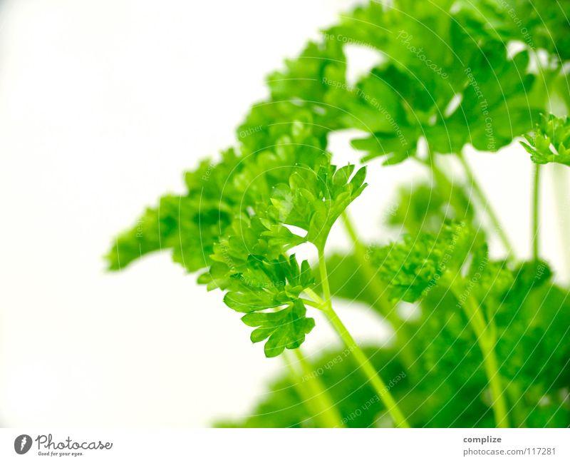 der Peter Petersilie Küche Kräuter & Gewürze grün Grünpflanze Kaugummi kochen & garen Zutaten Gesundheit Gastronomie dunkelgrün hellgrün Blattadern Gefäße Stil