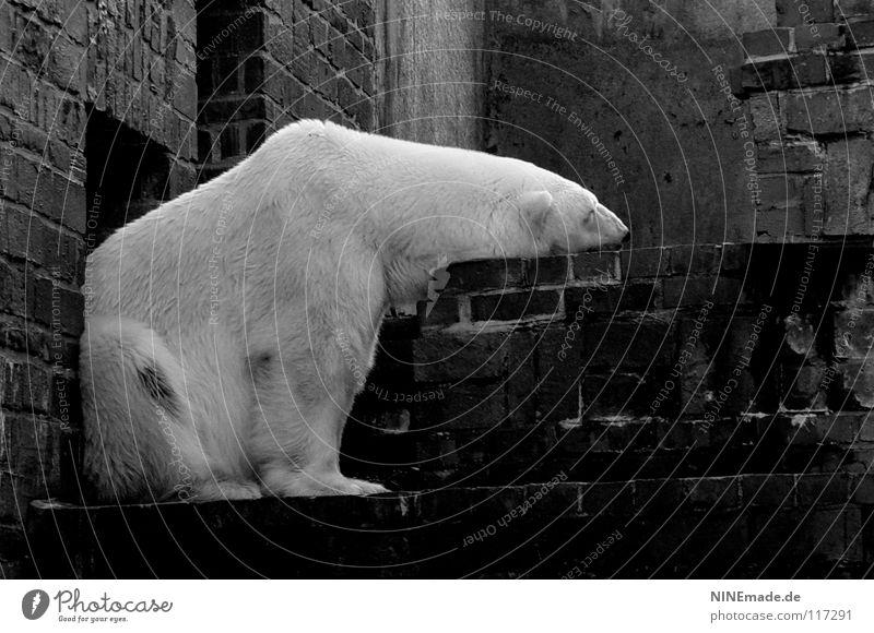 ohne dich ist ... alt weiß Tier Winter Einsamkeit schwarz Erholung kalt Wand Stein Traurigkeit Eis Stimmung Trauer weich Ohr