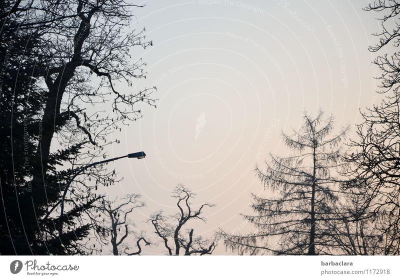 im Rampenlicht | Baumgruppe Natur Landschaft Himmel Park Straßenbeleuchtung Beleuchtung dunkel hell Stimmung bizarr ruhig Umwelt Gedeckte Farben Außenaufnahme