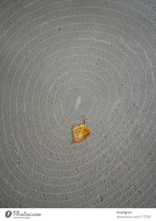 Einzelstück Blatt Einsamkeit Herbst grau braun Beton Vergänglichkeit Birke letzte Birkenblätter