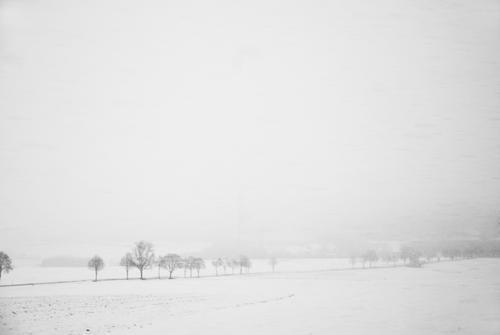 Der Winter wird hart Himmel Natur weiß Baum Landschaft kalt Umwelt Schnee Schneefall Wetter Eis Feld Frost Sturm Schneelandschaft