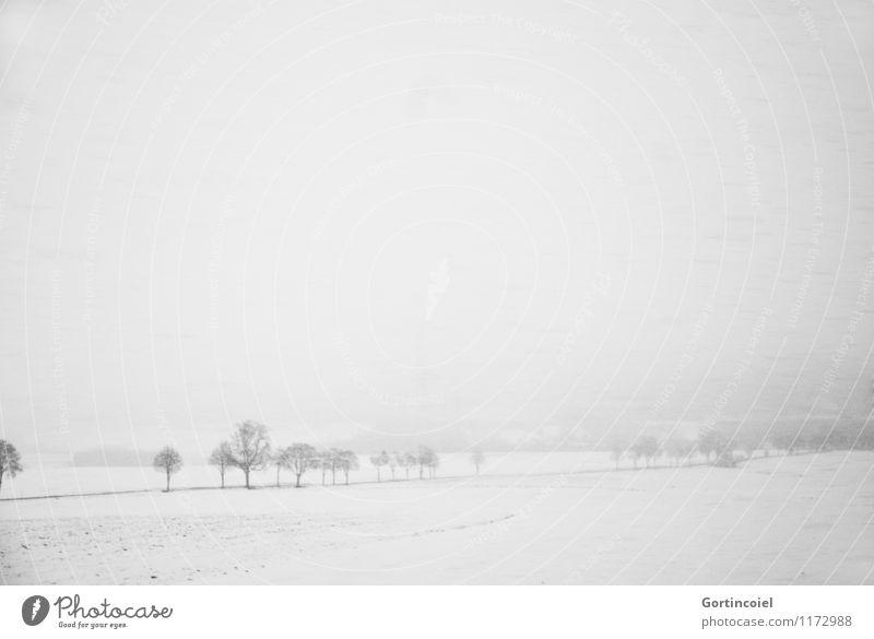 Der Winter wird hart Umwelt Natur Landschaft Himmel Wetter Sturm Eis Frost Schnee Schneefall Baum Feld kalt weiß Schwarzwald Schneelandschaft Gedeckte Farben
