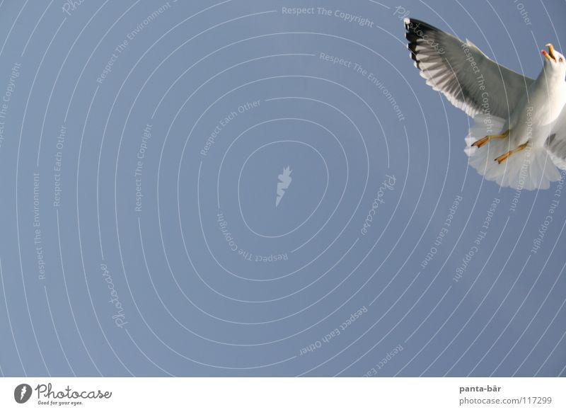 ...da ein Mövenpick Möwe Vogel blau Himmel Natur Wildtier Anschnitt Bildausschnitt Detailaufnahme Flügel Vogelflug fliegen fliegend Luft Freisteller
