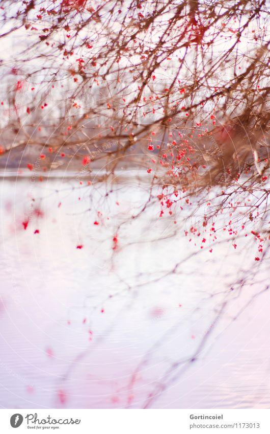 Seeufer Natur Pflanze schön Baum rot Landschaft Winter Umwelt Ordnung Sträucher chaotisch Beeren durcheinander Brennpunkt