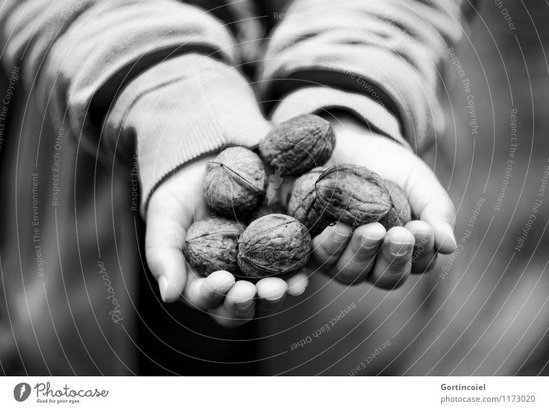 Walnussernte Mensch Kind Hand Herbst Lebensmittel maskulin Kindheit Finger festhalten Ernte zeigen herbstlich Nuss ansammeln geben 3-8 Jahre