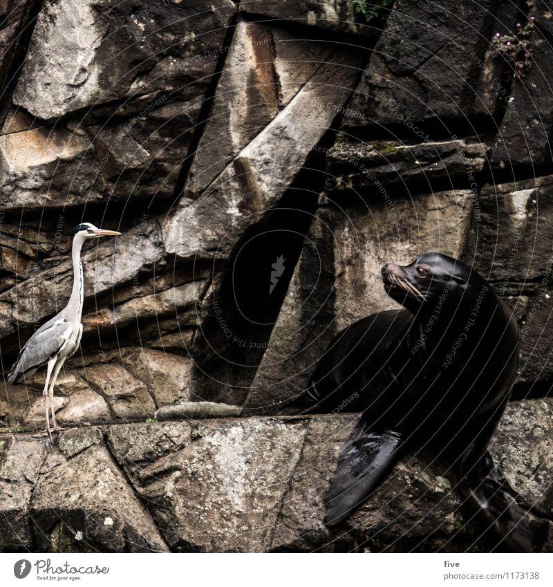 was wotsch? Natur Tier Vogel Zoo 2 Zusammensein Seelöwe Graureiher Blick Platzangst unsicher entdecken Wasser Felsen Wand Farbfoto Außenaufnahme Tag Porträt