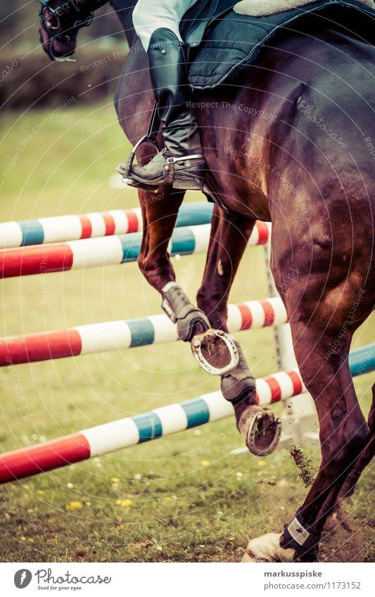 springreiter Mann Erwachsene springen Freizeit & Hobby Kraft Erfolg laufen ästhetisch Pferd sportlich Barriere Sportveranstaltung Behinderte Reitsport