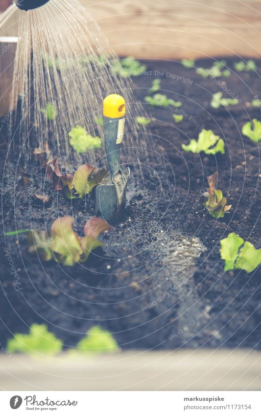 hochbeet urban gardening Lebensmittel Gemüse Salat Salatbeilage Bioprodukte Vegetarische Ernährung Diät Slowfood Gesundheit Gesunde Ernährung Freizeit & Hobby