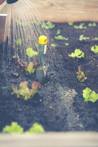 hochbeet urban gardening Pflanze grün Gesunde Ernährung Leben Gesundheit Garten Lebensmittel Wohnung Freizeit & Hobby Blühend Gemüse Bioprodukte Diät