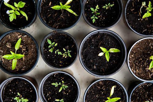 aufzucht urban gardening Stadt grün Gesunde Ernährung Leben Garten Wohnung Wachstum Fitness Gemüse Bioprodukte Umweltschutz Vegetarische Ernährung Tomate