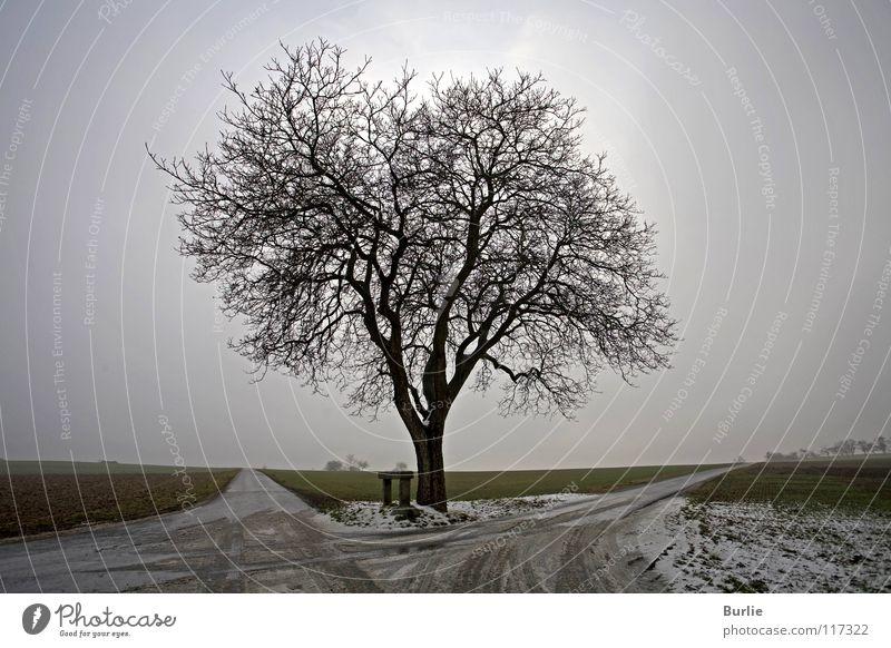 Warten auf den Frühling Baum Winter Einsamkeit warten leer Hoffnung Vorfreude Abzweigung laublos