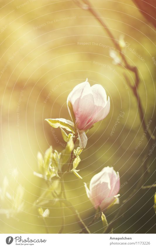 ::15-18:: Umwelt Natur Landschaft Pflanze Tier Sonne Frühling Klima Wetter Schönes Wetter Wärme Baum Blume Blatt Blüte Grünpflanze Garten Park Freude Glück