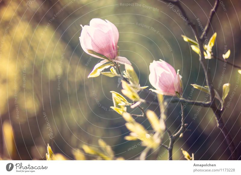::15-17:: Natur Pflanze schön Baum Blume Landschaft Blatt Tier Umwelt Blüte Frühling Garten Park Wetter Klima Schönes Wetter