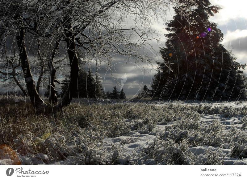WinterWonderLand Himmel weiß Baum Ferien & Urlaub & Reisen Wolken ruhig Landschaft dunkel kalt Schnee Berge u. Gebirge Eis glänzend Spaziergang Tanne