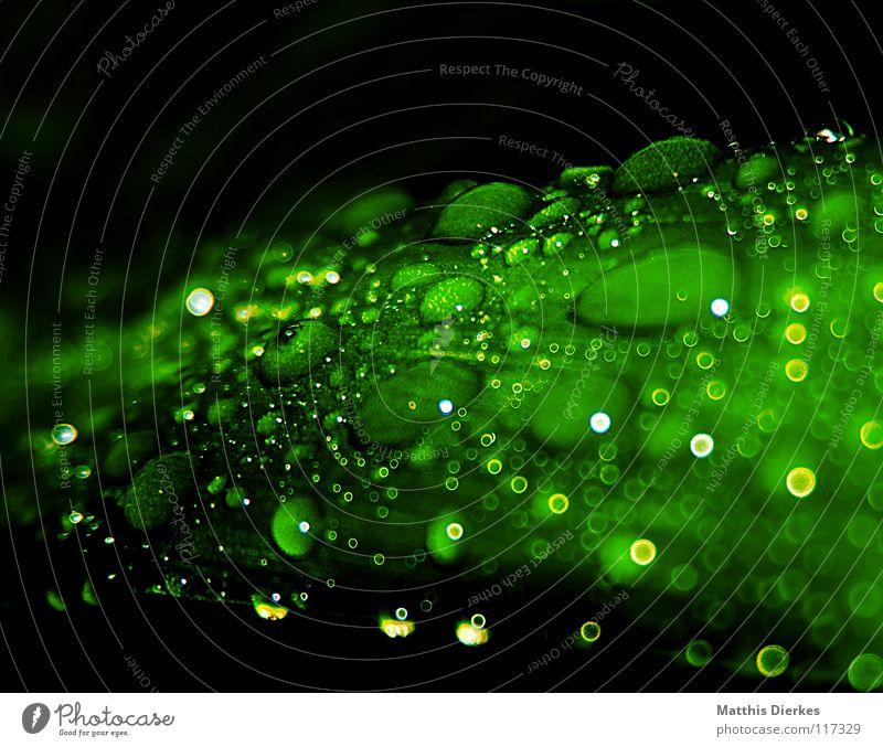 Tropfen I Wasser grün schön Baum Blatt gelb Lebensmittel Lampe Beleuchtung orange Regen fliegen ästhetisch stehen Wassertropfen Sträucher
