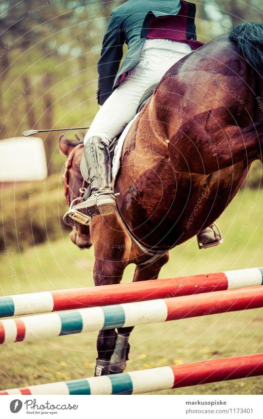 springreiter elegant Stil Freizeit & Hobby Reitsport Sportveranstaltung Erfolg Pferd Mann Erwachsene laufen springen ästhetisch sportlich balk barricade