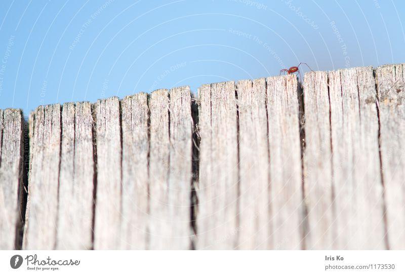 hoch hinaus Natur Tier Insekt 1 krabbeln klein natürlich dünn rot Angst Höhenangst Bewegung Milbe Gliederfüßer Farbfoto mehrfarbig Außenaufnahme Nahaufnahme