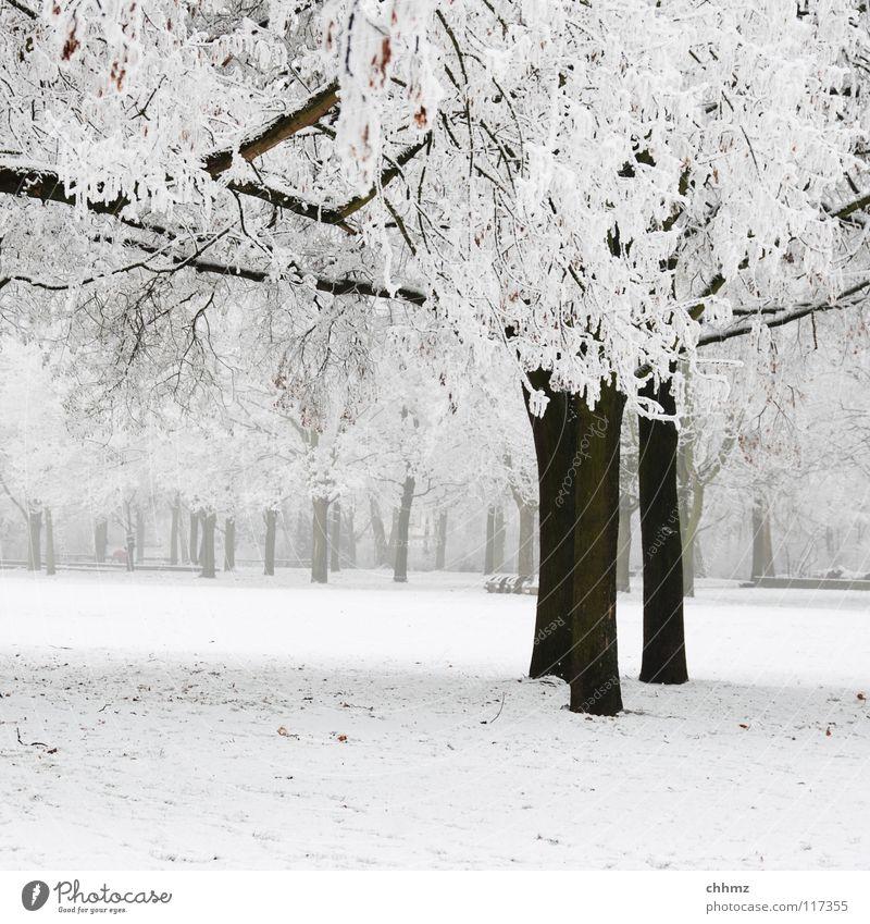 Winter im Park weiß Baum Einsamkeit Wald kalt Eis Nebel Frost tief Baumstamm Baumkrone Glätte flach Raureif