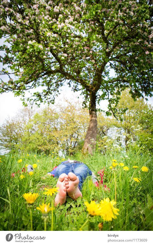 den Frühling genießen Mensch Natur Ferien & Urlaub & Reisen Jugendliche Pflanze Junge Frau Baum Erholung 18-30 Jahre Erwachsene Blüte Wiese liegen träumen