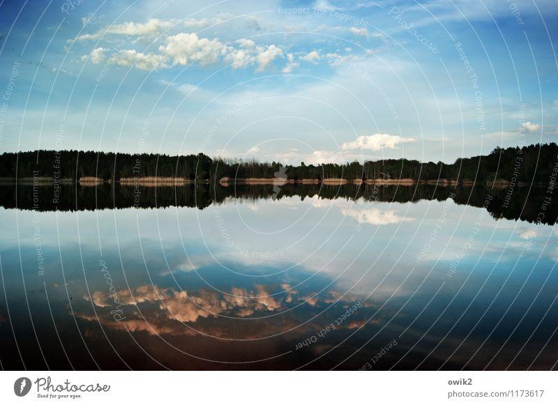 Weit Ferne Freiheit Umwelt Natur Landschaft Urelemente Luft Wasser Himmel Wolken Horizont Klima Wetter Schönes Wetter Wald Seeufer Brandiser See Badesee