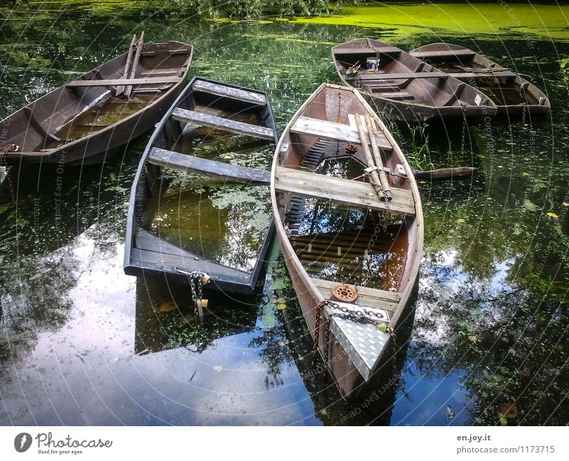 bitte einsteigen Ausflug Abenteuer Sommer Umwelt Natur Landschaft Wasser Schönes Wetter Algen Wasserpflanze Teich Fluss Flußauen Rheinauen Fischerboot Ruderboot