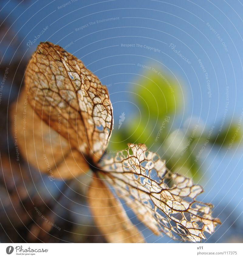 Im Sonnenschein Himmel blau Blume Blatt Herbst Park dünn vergangen Gefäße verblüht