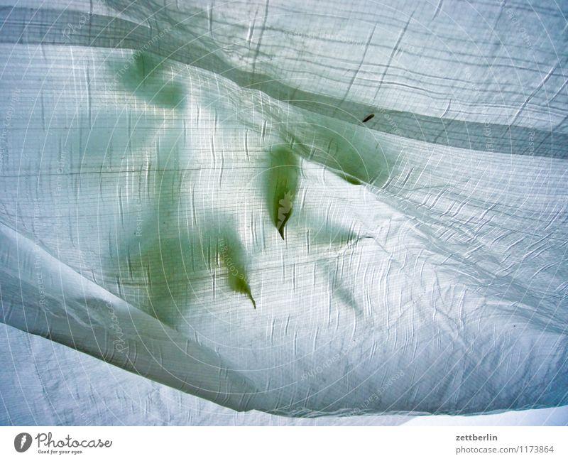 Blätter Blume Blumenstrauß Blüte Blütenblatt Blatt Vase Schwache Tiefenschärfe Unschärfe Glas Fensterscheibe Glasscheibe Schaufenster Strukturen & Formen