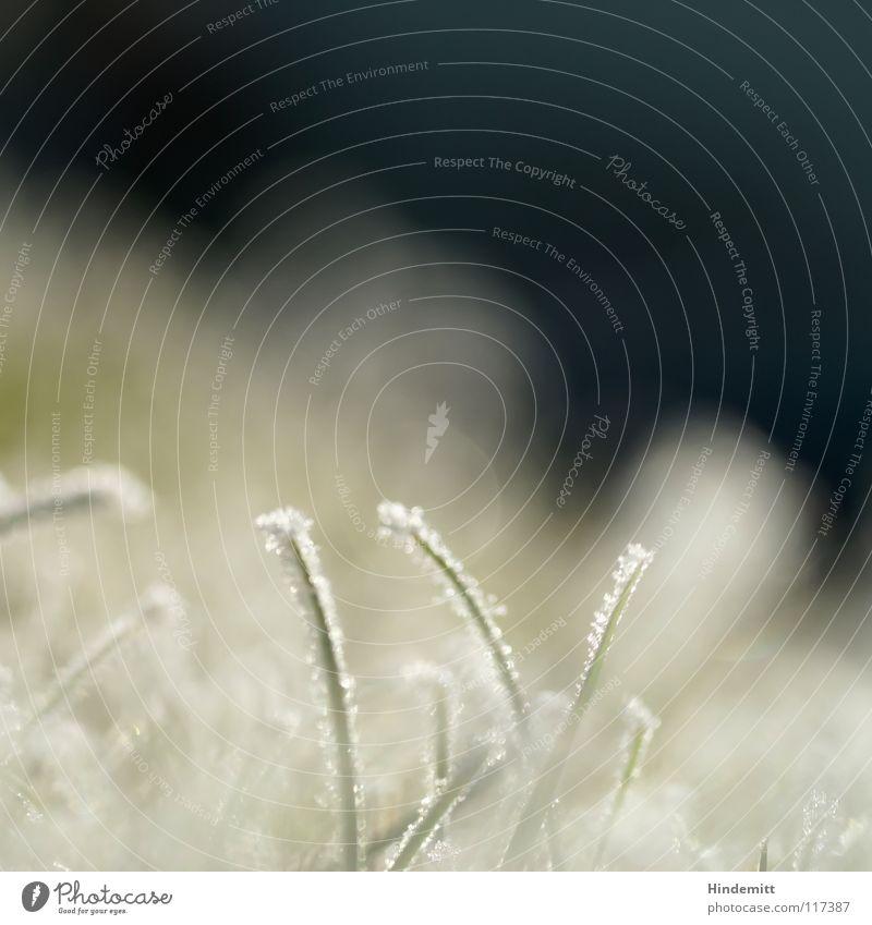 O|teile| weiß grün Winter kalt Schnee Wiese Gras hell Eis glänzend Nebel süß stehen Rasen Halm vertikal