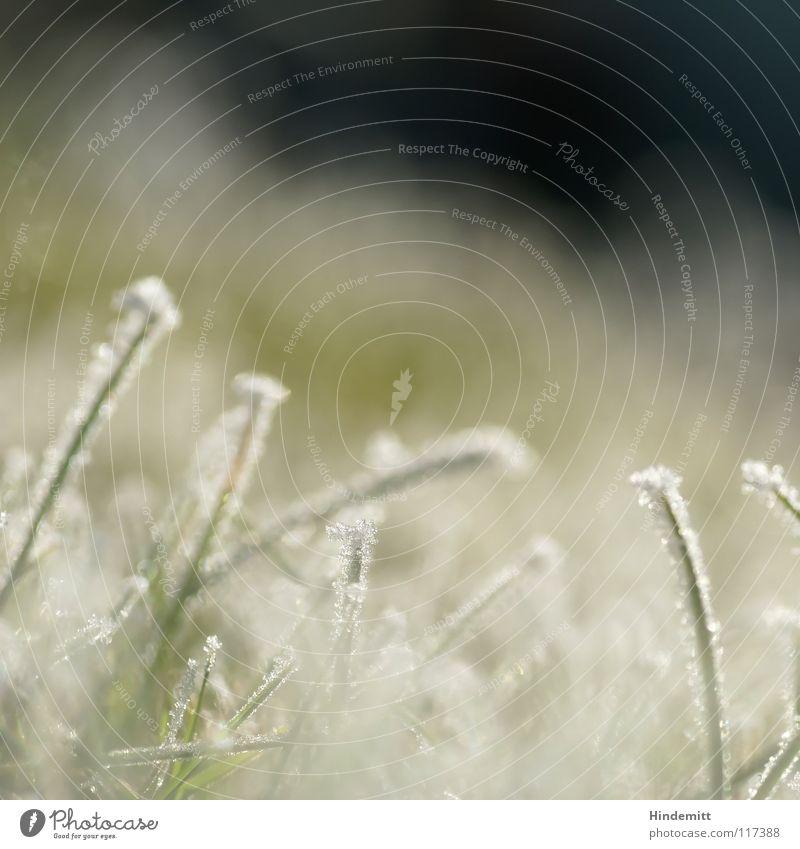 |Puzzle|C Gras Halm kalt Nebel Raureif grün weiß glänzend süß Zucker überzogen Unschärfe vertikal stehen Wiese Winter Eis Kristallstrukturen Schönes Wetter hell