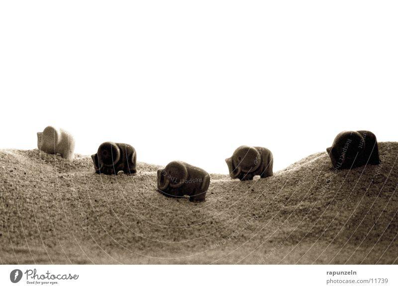 Porzelan-Elephanten auf der Reise Elefant wandern Korn Ferien & Urlaub & Reisen Kette Spaziergang Sand Wüste Gengenlicht