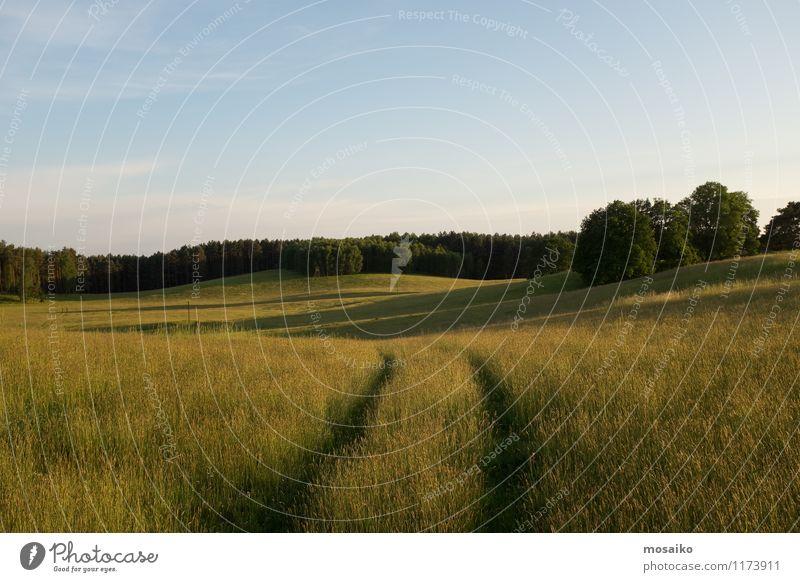 Weites Feld Ferien & Urlaub & Reisen Tourismus Ausflug Ferne Freiheit Sommer Sommerurlaub Sonne Umwelt Natur Landschaft Pflanze Horizont Wiese Wald Menschenleer