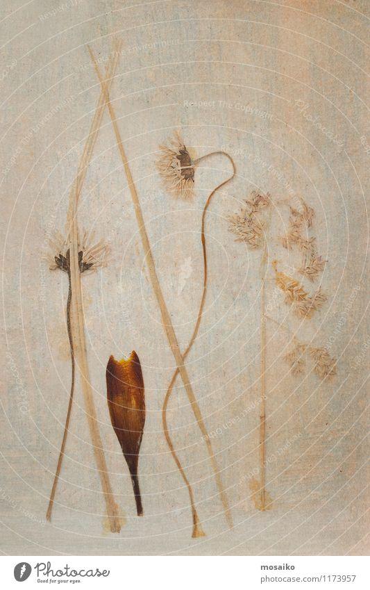 Blumen Natur alt Pflanze schön Umwelt gelb Traurigkeit Herbst Senior Hintergrundbild Stein braun Kunst Design Vergänglichkeit retro