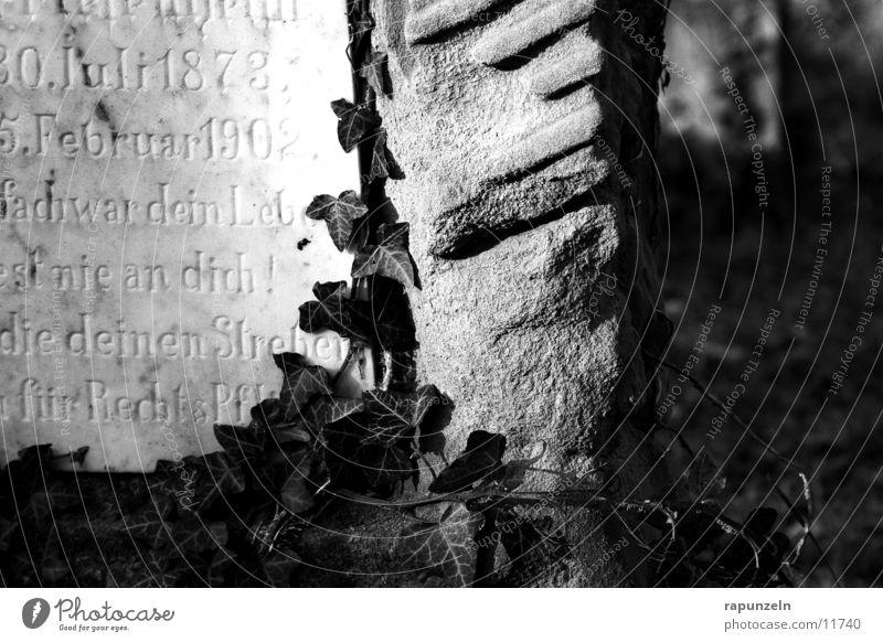 Grab #2 Judentum Friedhof Grabmal Grabstein Aufschrift Efeu bewachsen historisch Dekoration & Verzierung Sonne Lichterscheinung Schatten Menschenleer