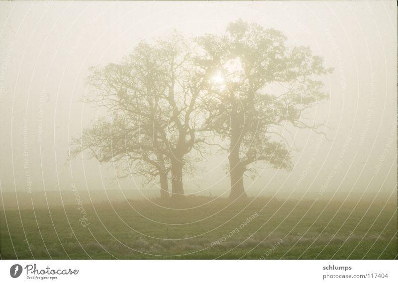Bäume bei Lenschow Natur Baum Herbst Wiese Feld Nebel Mecklenburg-Vorpommern