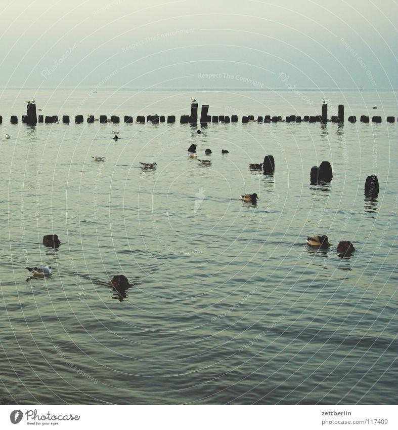 Ahlbeck Meer See Flutschutzanlage Gewässer Vogel Horizont ruhig Ferne Sehnsucht Winter Nebensaison Ferien & Urlaub & Reisen Strand Küste Freizeit & Hobby Ostsee