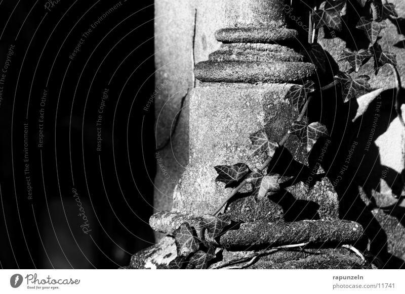 Grab #1 Sonne historisch Friedhof Efeu bewachsen Judentum Grabstein Grabmal