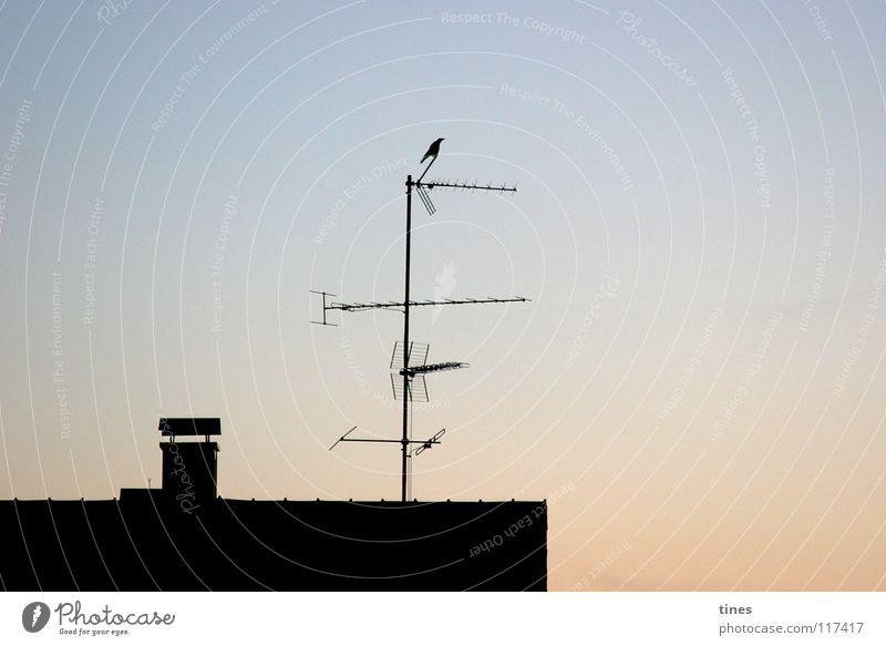 guter Empfang Himmel Haus Vogel oben Aussicht hoch Elektrizität Dach Turm Fernsehen Abenddämmerung Schornstein Begrüßung Rabenvögel Antenne überblicken