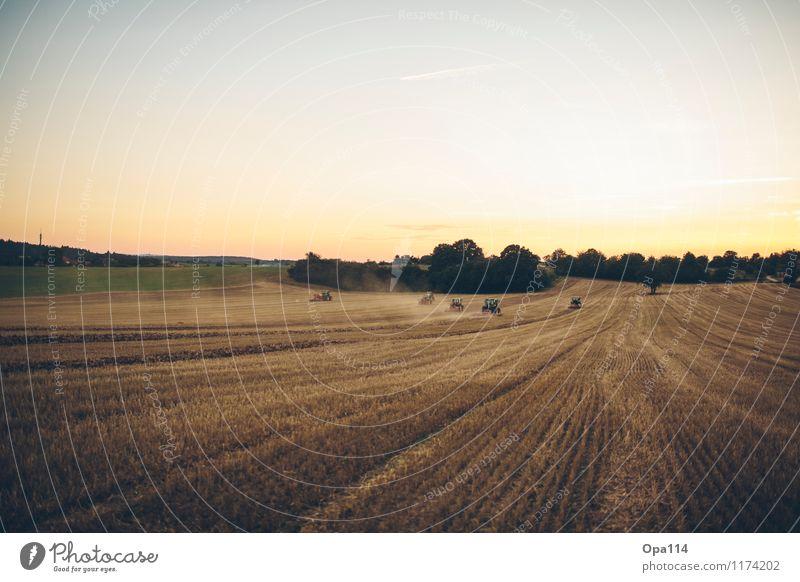 """Feldtag Umwelt Natur Landschaft Pflanze Tier Sonnenaufgang Sonnenuntergang Sommer Nutzpflanze Arbeit & Erwerbstätigkeit """"Traktor Traktoren Landwirtschaft"""