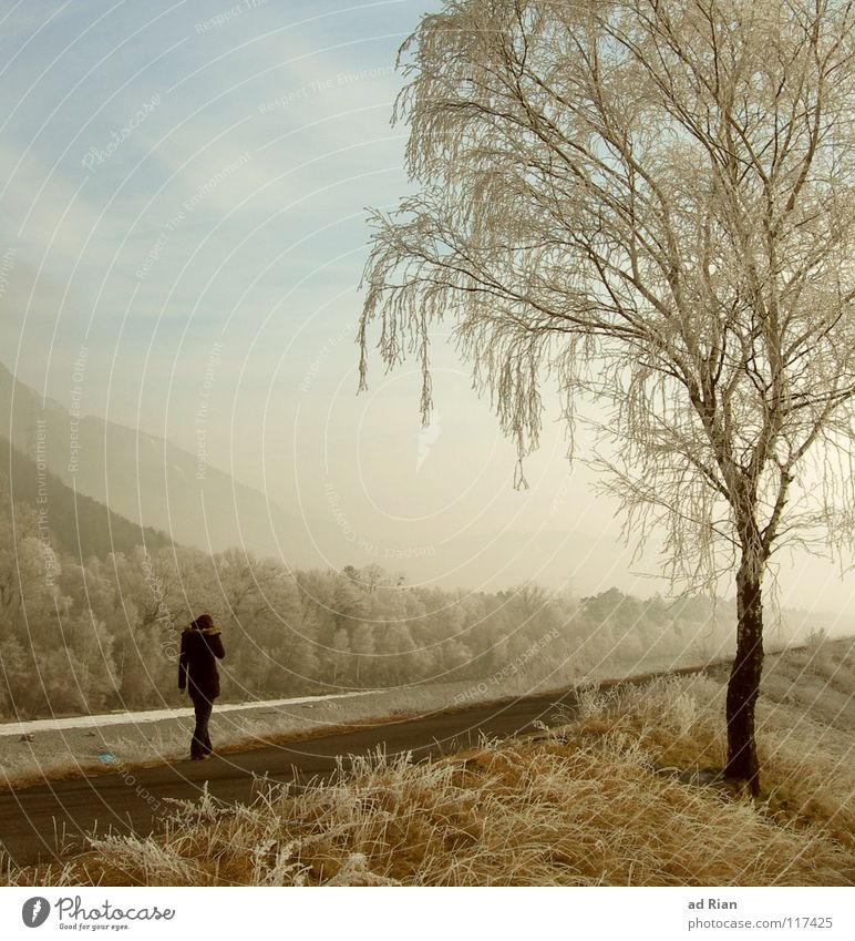 Where the Streets Have no Name Erholung ruhig Spaziergang Winter Frau Erwachsene 1 Mensch Natur Sonnenlicht Nebel Eis Frost Schnee Dürre Baum Wiese Fluss