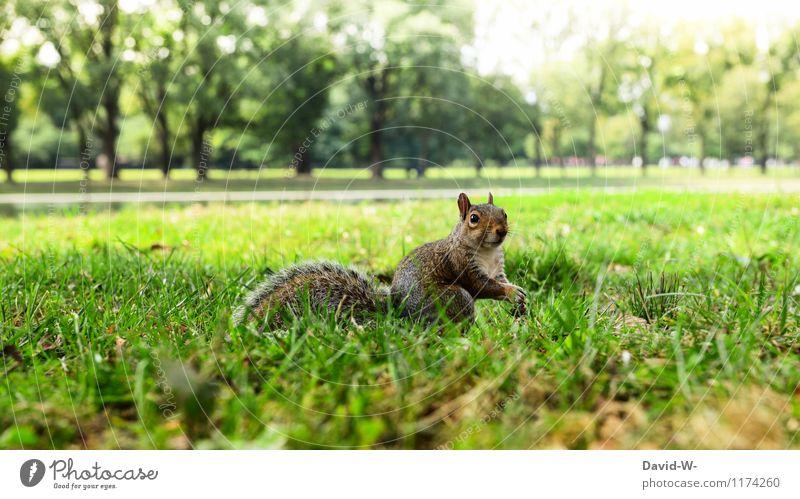 Nanu 8) Natur grün Sommer Sonne Landschaft ruhig Tier Umwelt Tierjunges Wiese Park Wildtier beobachten niedlich Schönes Wetter berühren