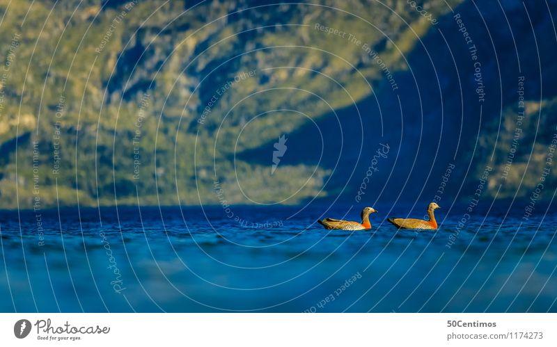 Schwimmende Enten Angeln Jagd Ferien & Urlaub & Reisen Tourismus Ausflug Abenteuer Sommer Sommerurlaub Umwelt Natur Landschaft Schönes Wetter Wald