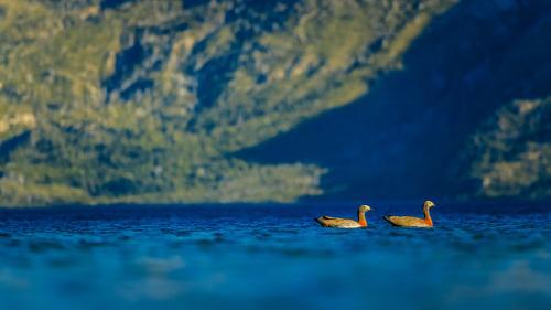 Schwimmende Enten Natur Ferien & Urlaub & Reisen Sommer Landschaft Tier Wald Berge u. Gebirge Umwelt Küste Tourismus Schwimmen & Baden See Ausflug Abenteuer