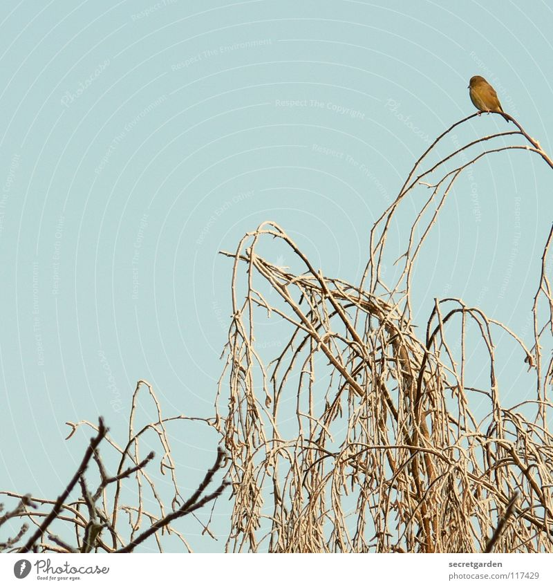 gute aussichten. Himmel Natur blau Baum Einsamkeit Tier Winter ruhig Erholung Ferne dunkel Tod Herbst oben klein Garten