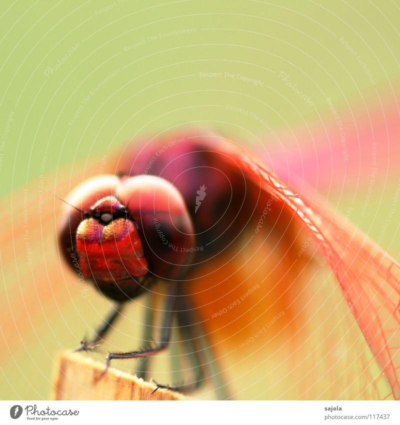 think pink Farbfoto mehrfarbig Außenaufnahme Nahaufnahme Detailaufnahme Makroaufnahme Textfreiraum oben Schwache Tiefenschärfe Tierporträt Blick nach vorn