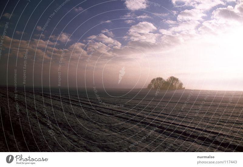 Kalte Ferne Horizont Fernweh Heimat Feld Aussaat Sträucher kalt gefroren Nebel Stimmung Morgen Wolken Winter Blatt laublos Unendlichkeit fein Landleben