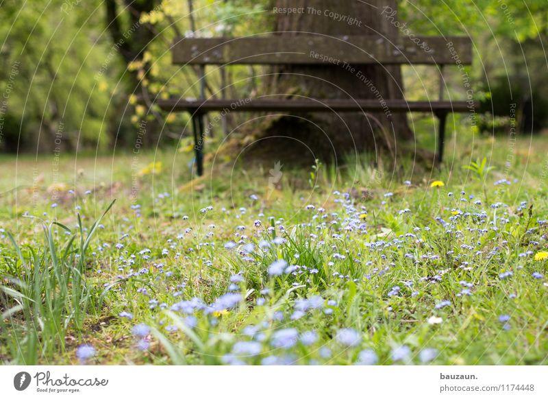 vergissmeinnicht. Natur Pflanze Sommer Baum Erholung Landschaft ruhig Freude Umwelt Frühling Blüte Wiese Gras Glück Garten Park