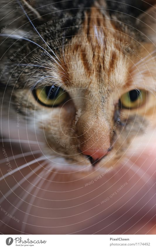 Katze Katze Tier Garten braun Freundschaft sitzen niedlich Warmherzigkeit Neugier loyal