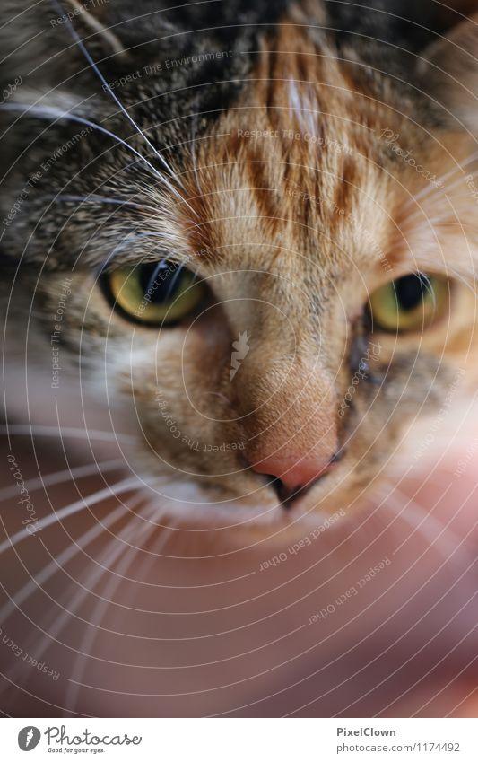 Katze Tier Garten braun Freundschaft sitzen niedlich Warmherzigkeit Neugier loyal